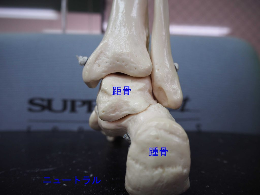 踵の中間位